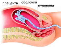 Нормалната дебелина на плацентата по време на бременност