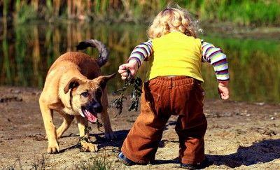 детето се страхува от кучета 5