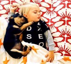 детето се страхува от кучета 4