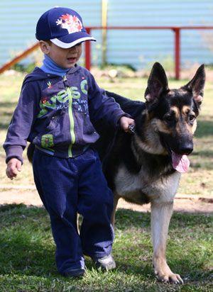 Ребенок дома: первая встреча с собакой