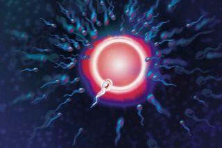 При планировании беременности важно знать о периоде жизнеспособности семенной жидкости